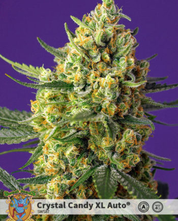 Sweet Seeds Crystal Candy XL Auto